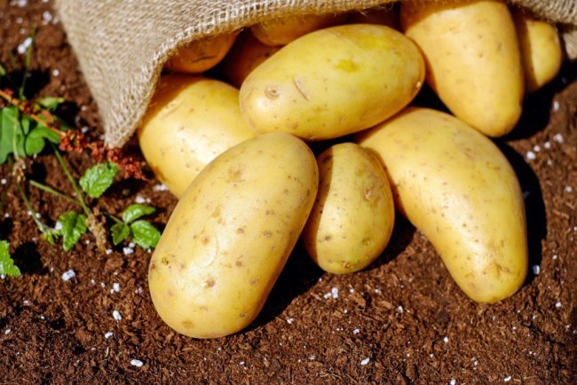 potatoes-vegetables-erdfrucht-bio-144248
