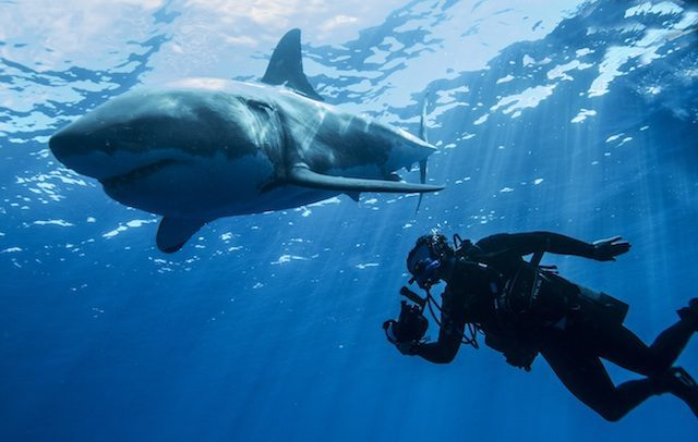 Diving with sharks in Palau