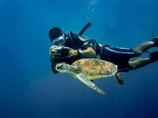 Swimming with sea turtles The Maldives