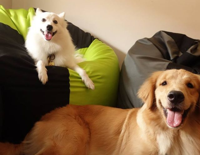 Bean bags for pets