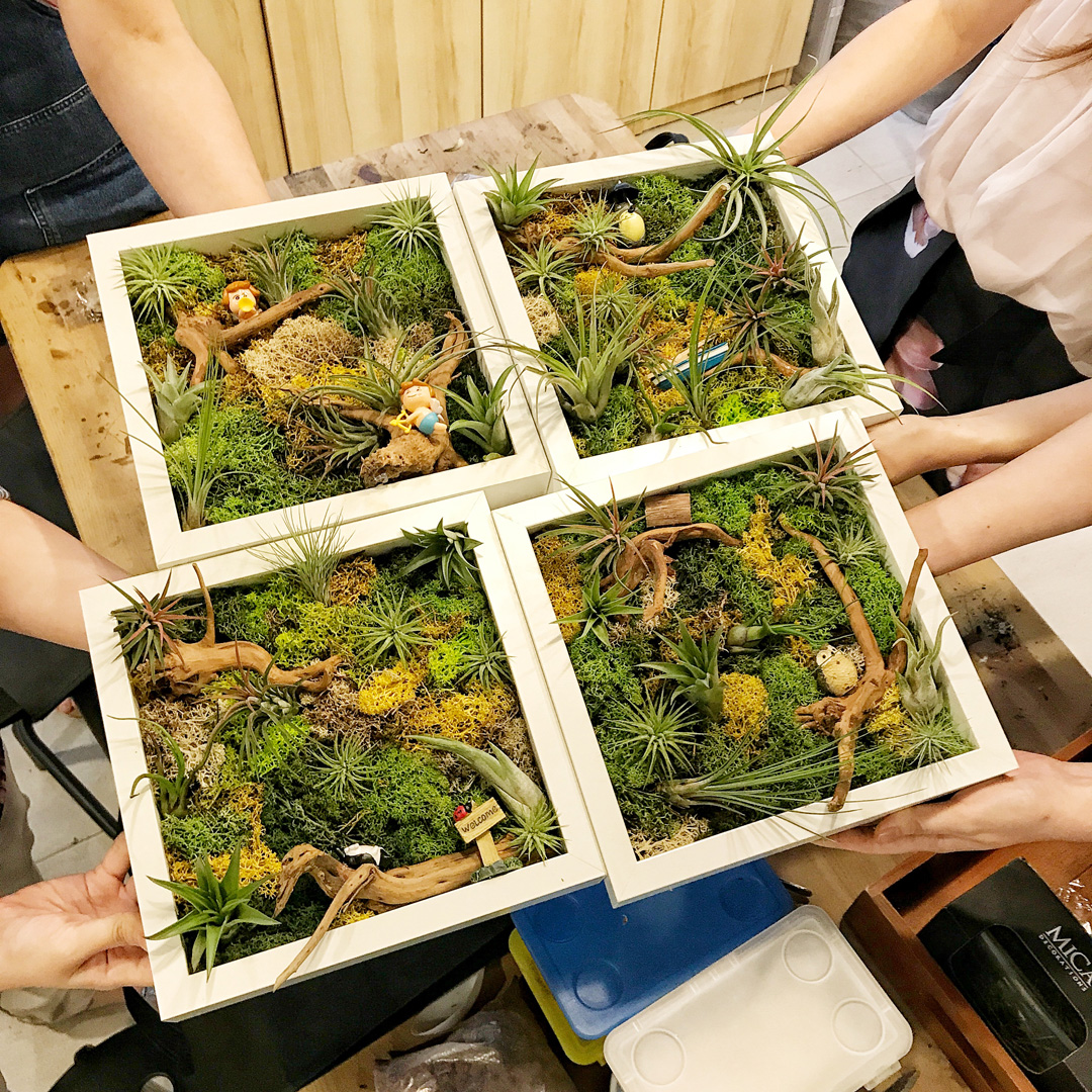 1 Hour Airplant Greenwall Workshop (1 Pax)