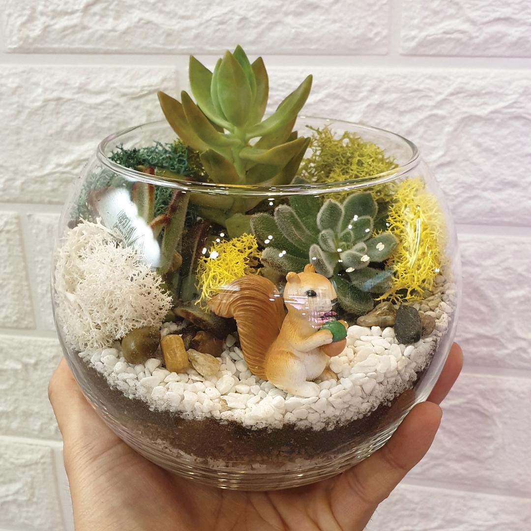1 Hour Open Succulent Terrarium Workshop (1 Pax)