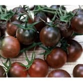 Bibit Bunga Bibit Benih Seeds Blackcherry Tomat Sayur Unik Hitam